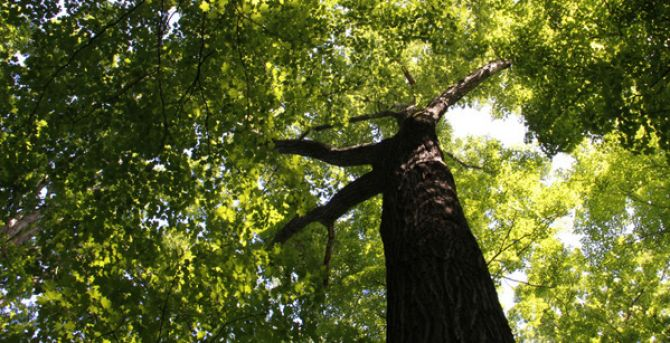 Strengthening Community-Based Outcomes through Urban Forestry