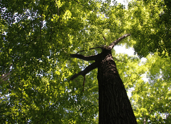 social forestry thesis Abstract: this dissertation offers an anthropological and genealogical account of  forests and social forestry, in particular the way they came to.